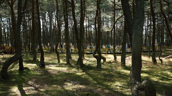 Туристы в Танцующем лесу в национальном парке Куршская коса в Калининградской области