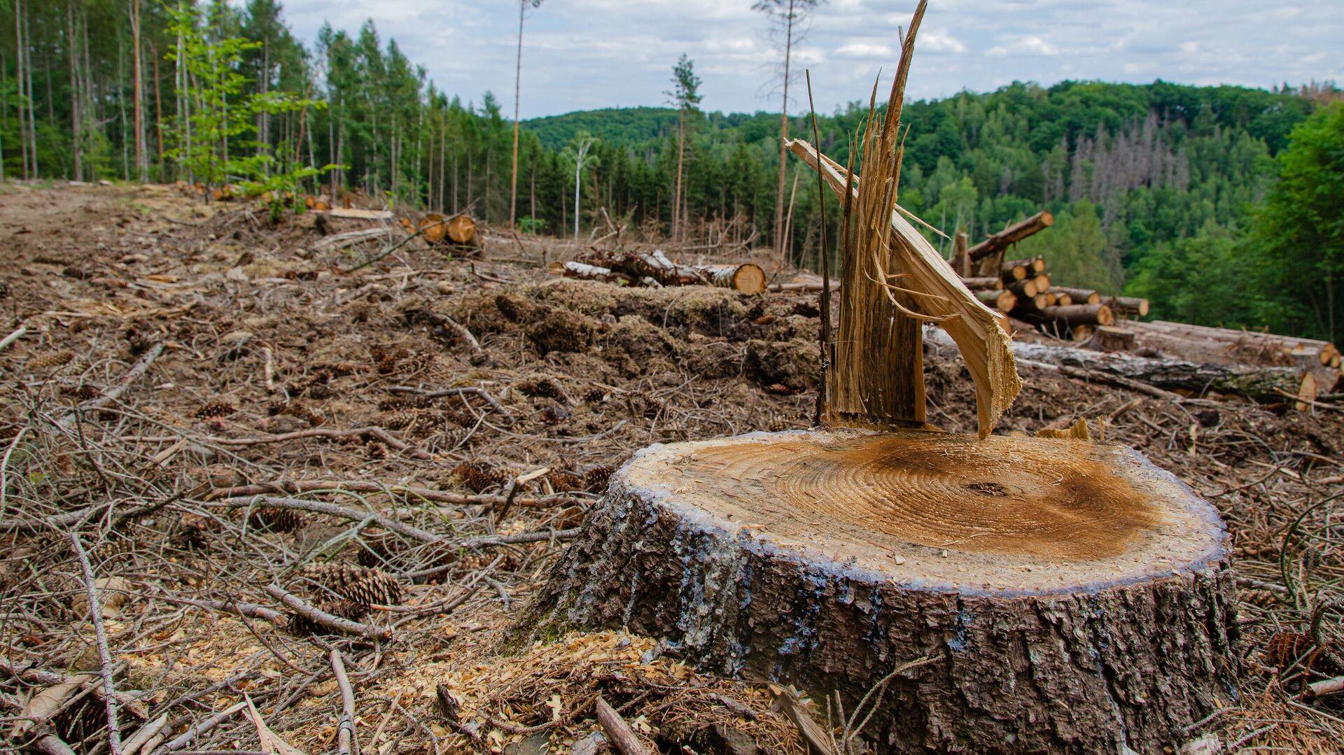 Вырубка леса - РИА Новости, 1920, 21.04.2021
