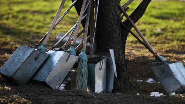 Уборочный инвентарь прислонен к стволу дерева
