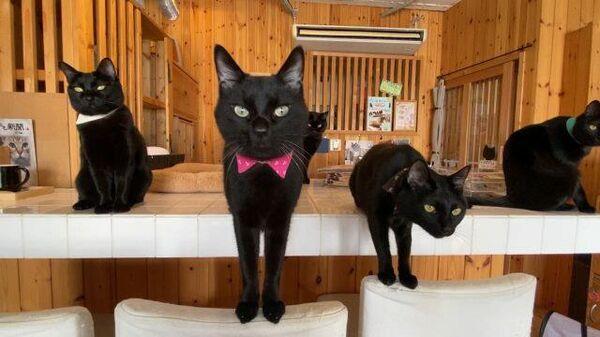 В Японии для любителей черных кошек открыли котокафе