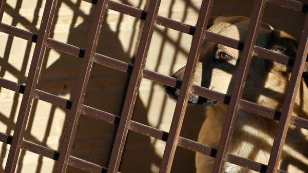 Комитет Госдумы попросил проверить работу приютов для животных в Улан-Удэ