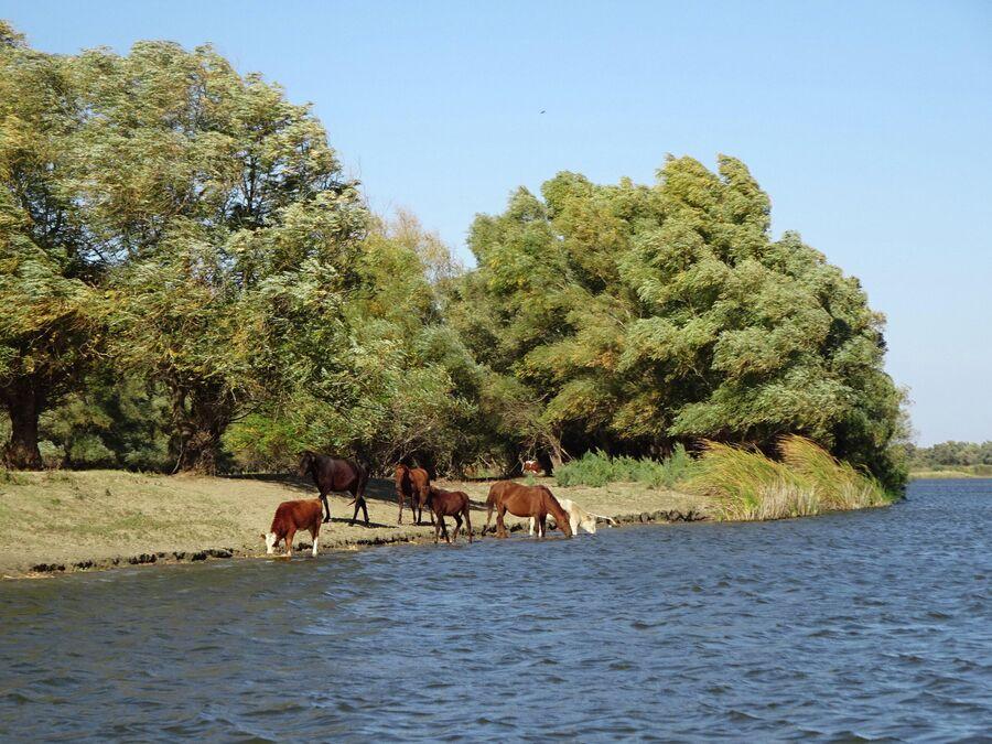 Протока в дельте Волги