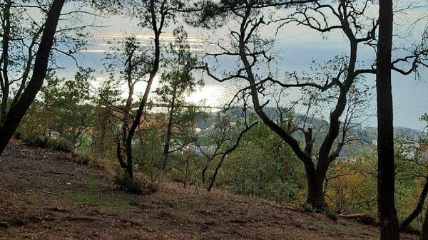 Смотровая площадка в Ялтинском горно-лесном заповеднике