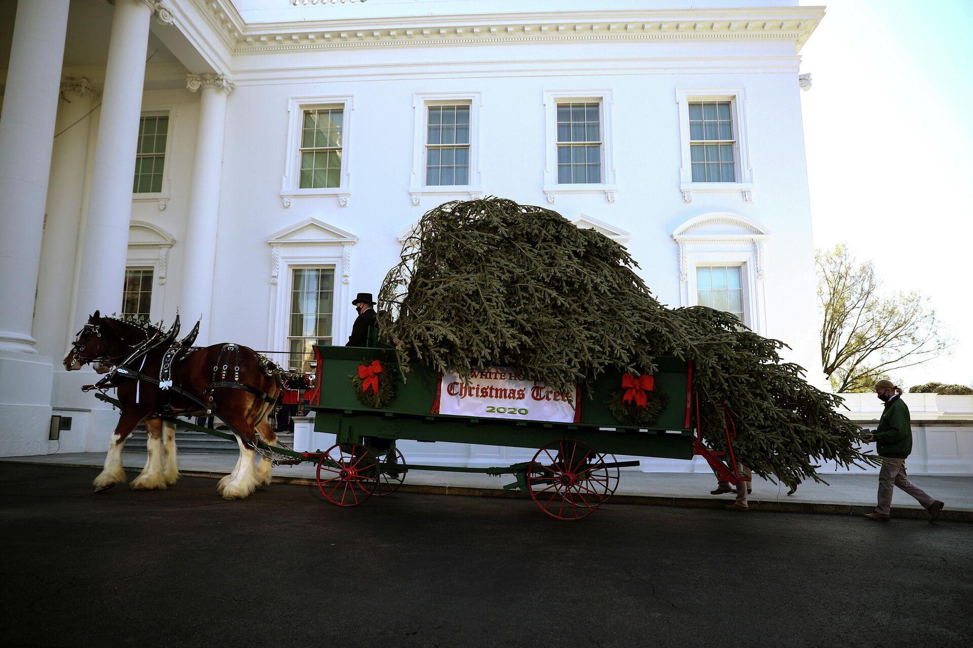 Доставка рождественской ели в Белый дом, Вашингтон  - РИА Новости, 1920, 25.11.2020