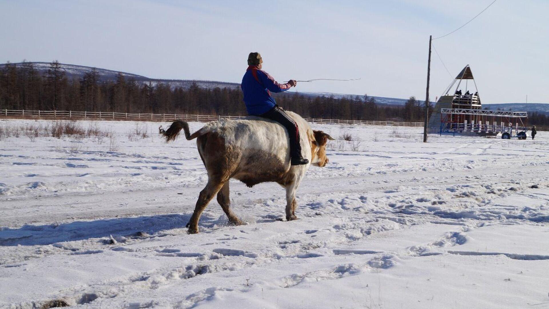 Гонки на быках по-Верхоянски - РИА Новости, 1920, 03.01.2021