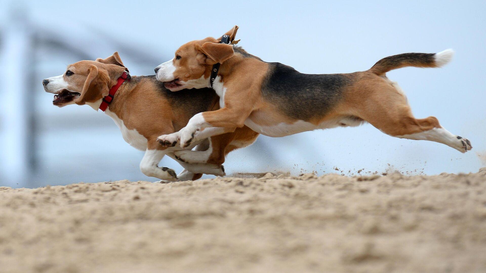Названы десять пород собак с самым крепким здоровьем