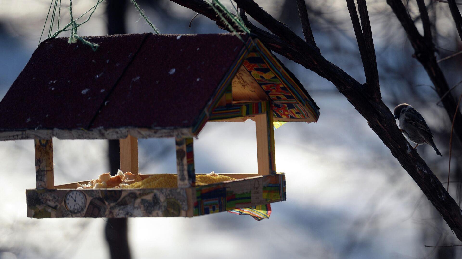 Птица у кормушки в парке Сокольники в Москве - РИА Новости, 1920, 28.02.2021