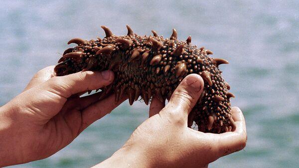 Сахалинский житель держит в руках трепанга