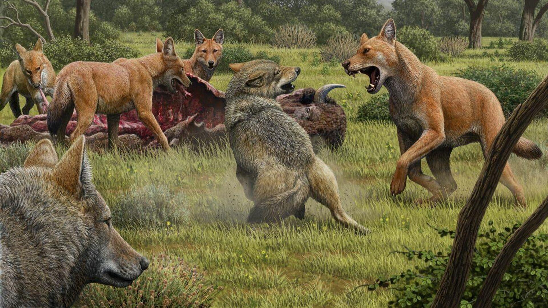 Так в представлении художника выглядели ужасные волки, отгоняющие серых волков от туши бизона - РИА Новости, 1920, 13.01.2021