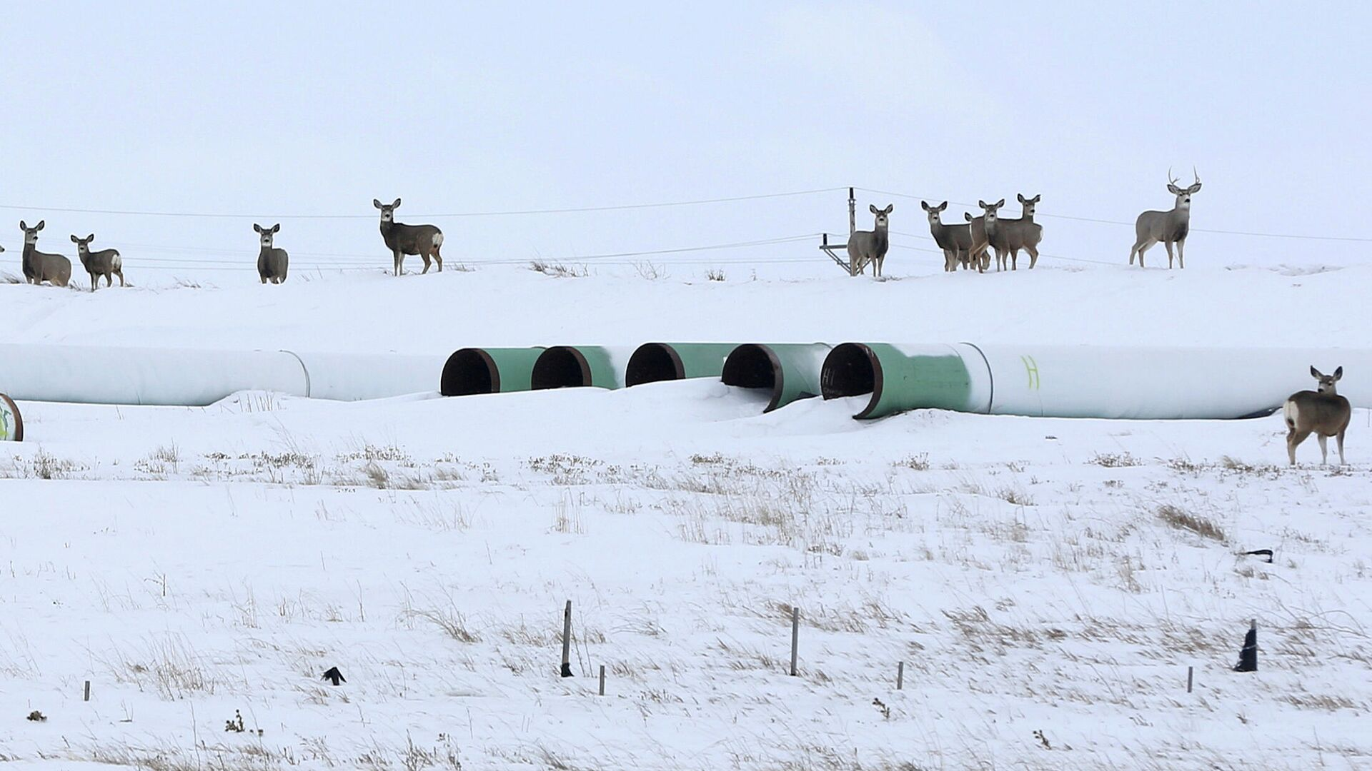Трубы для нефтепровода Keystone XL в Гаскойне, Северная Дакота - РИА Новости, 1920, 26.01.2021