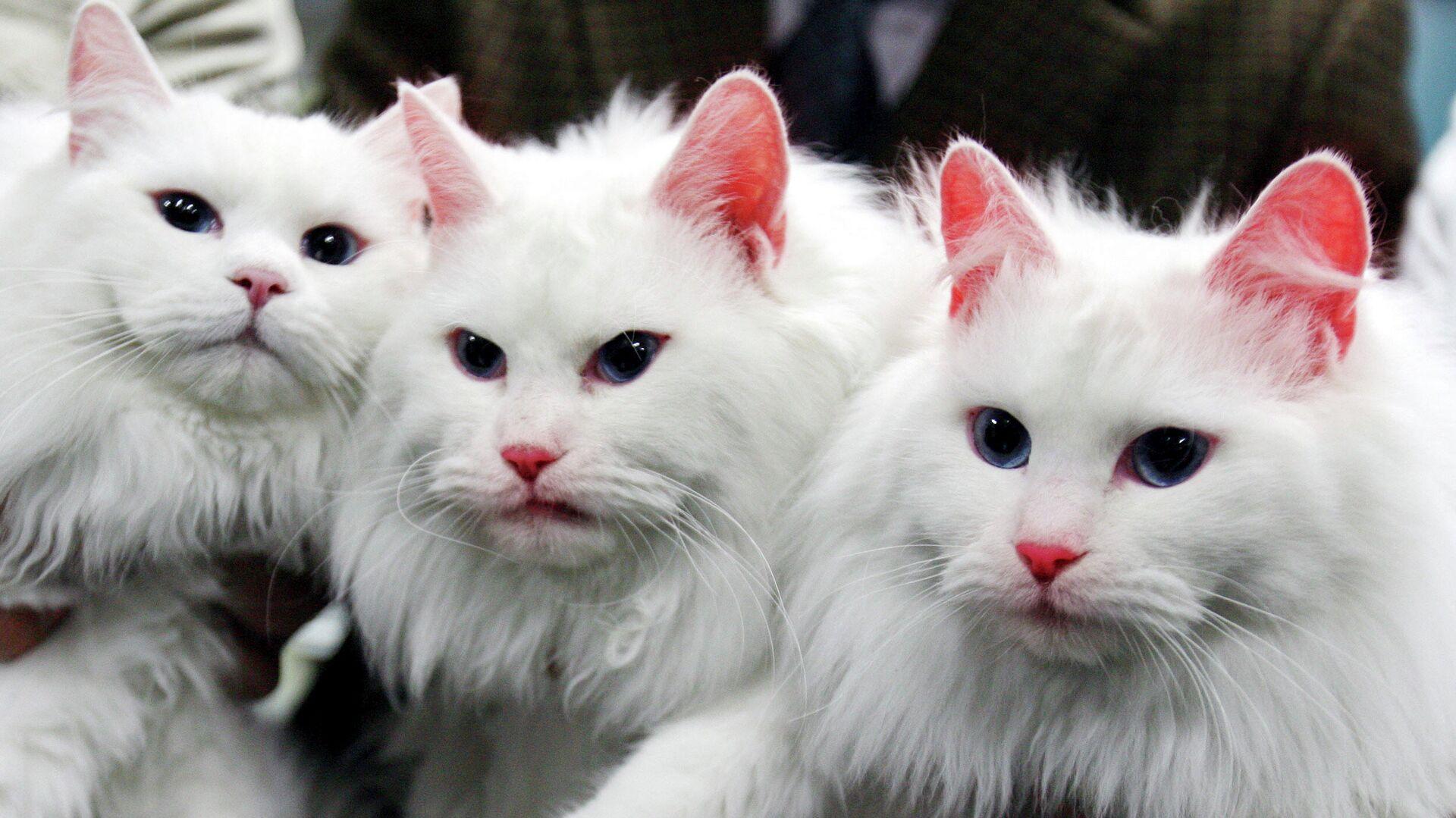 Две клонированные кошки ( в центре и справа) в Национальном университете Кёнсон, Южная Корея - РИА Новости, 1920, 21.03.2021
