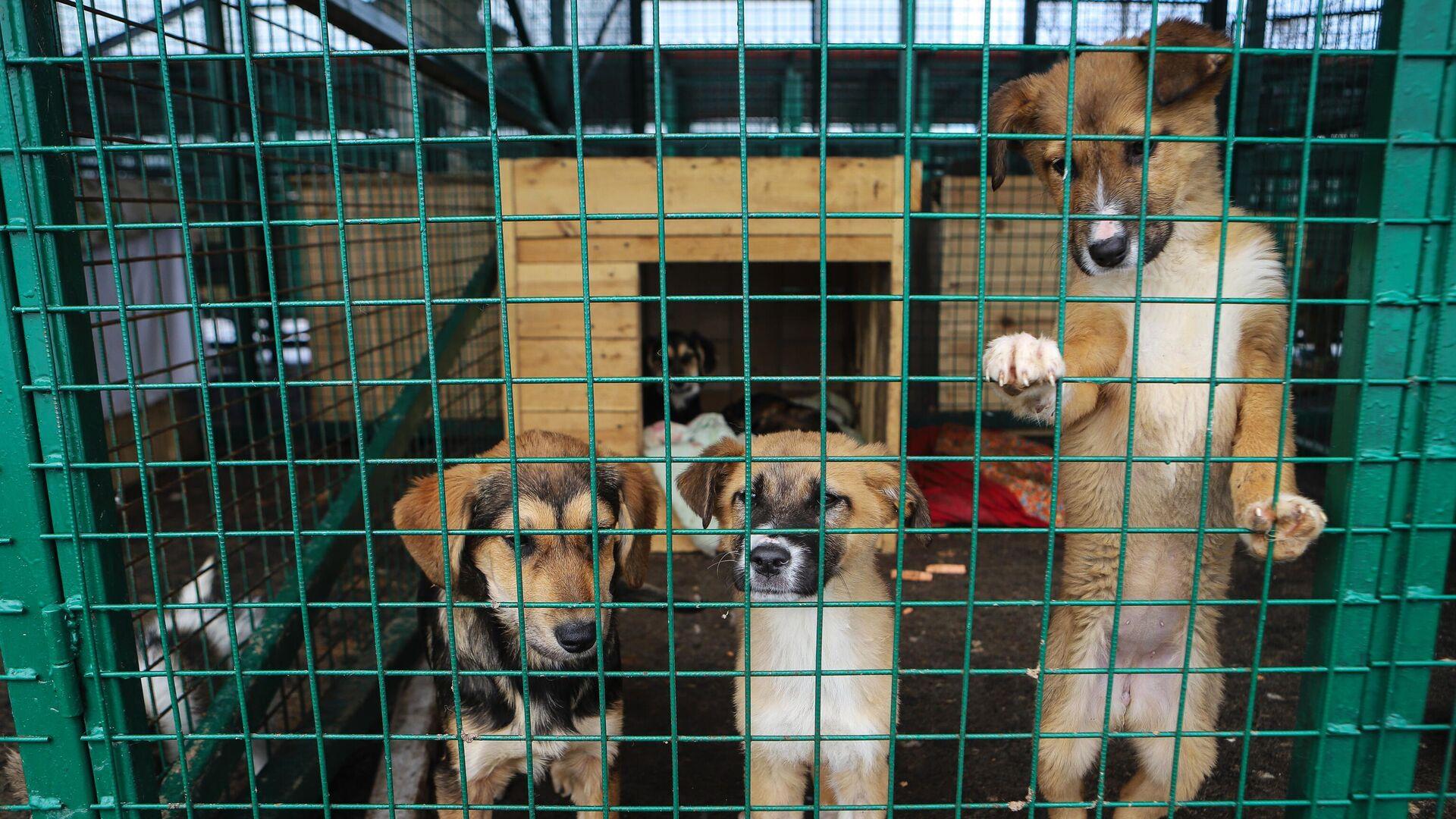 Отлов бездомных собак во Владикавказе - РИА Новости, 1920, 06.04.2021