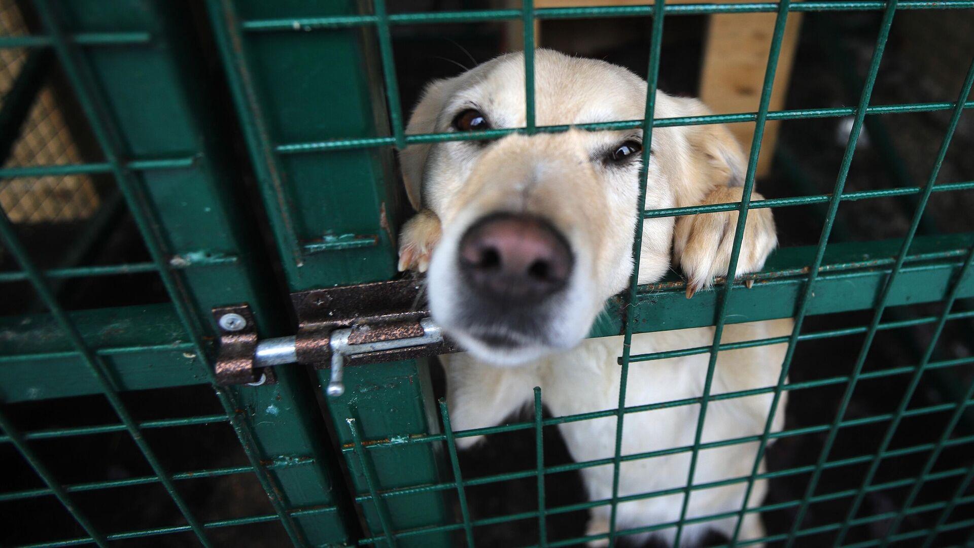 Бродячая собака в вольере приюта для бездомных животных Владпитомник во Владикавказе - РИА Новости, 1920, 07.04.2021