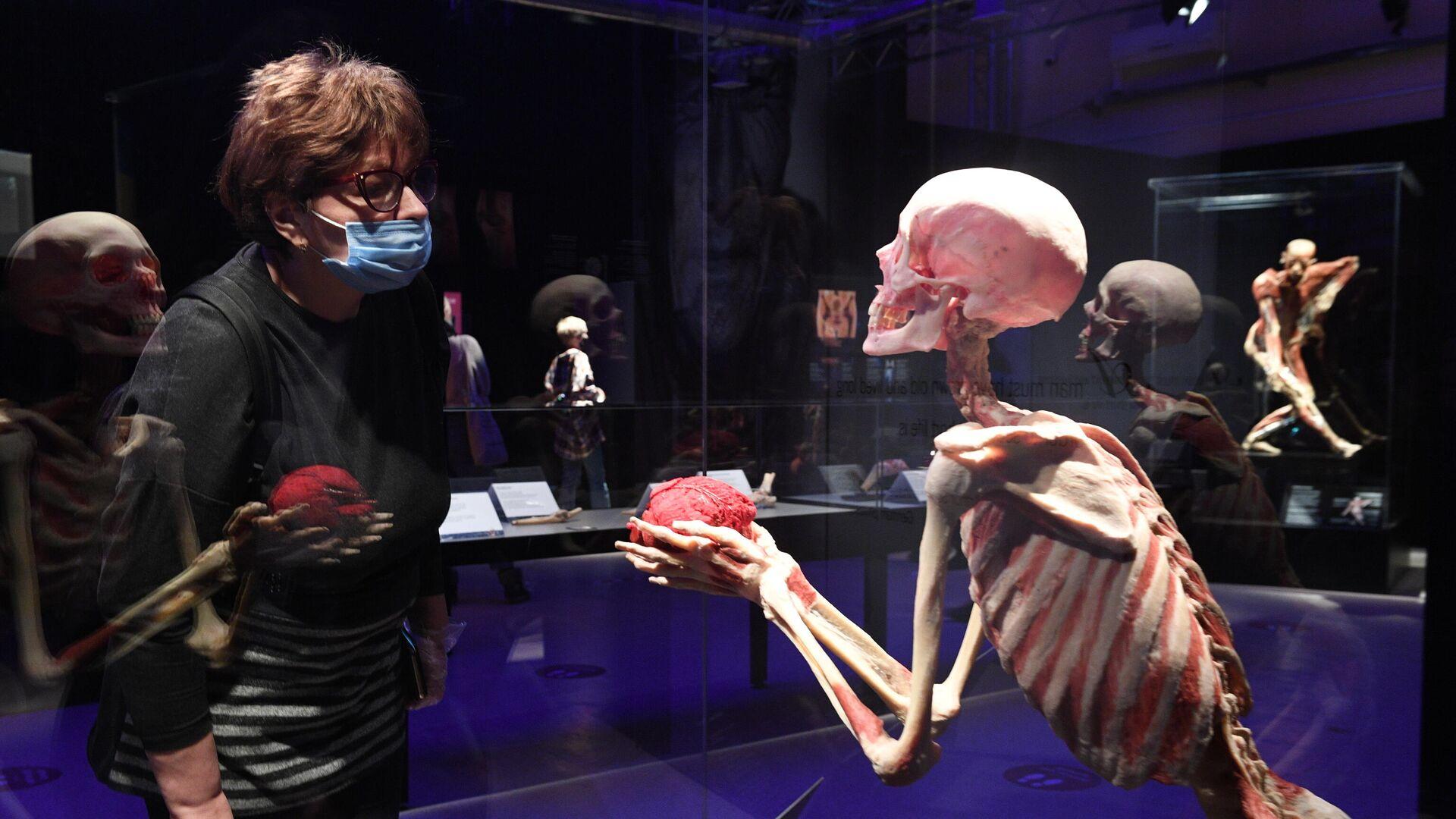 Выставка Body Worlds. Мир тела в Москве - РИА Новости, 1920, 12.03.2021