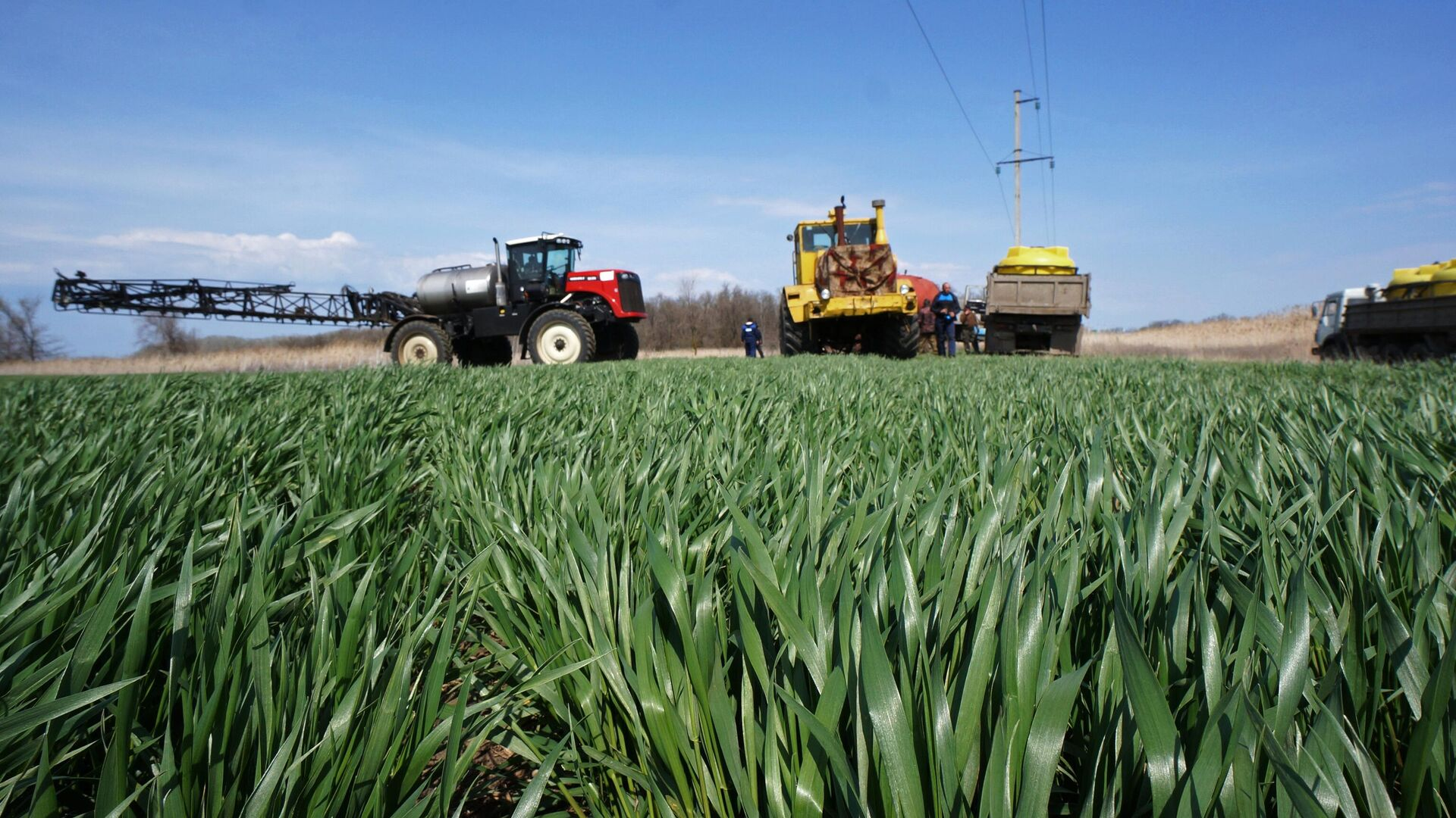 Ученые пересматривают технологии выращивания пшеницы для повышения урожая