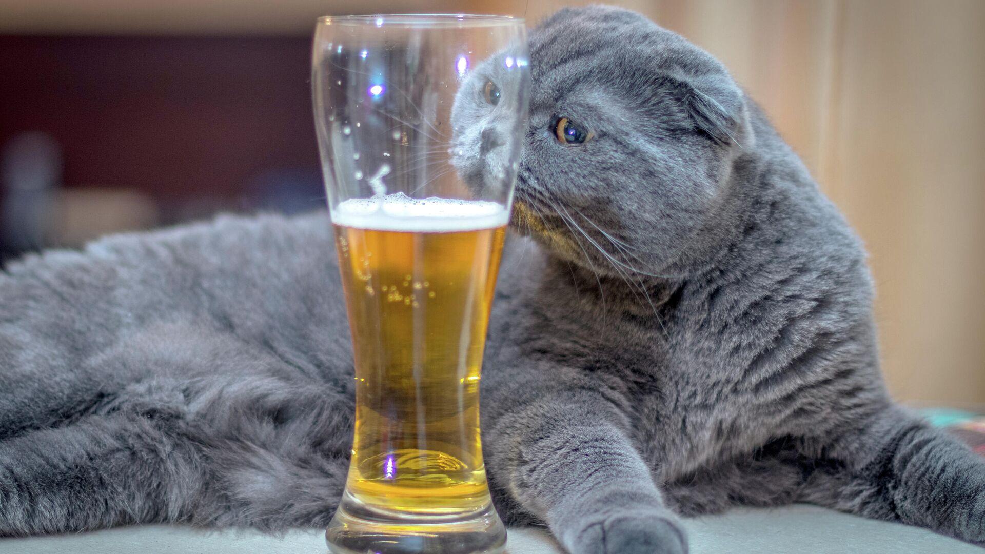 Кошка и стакан с пивом - РИА Новости, 1920, 12.09.2021