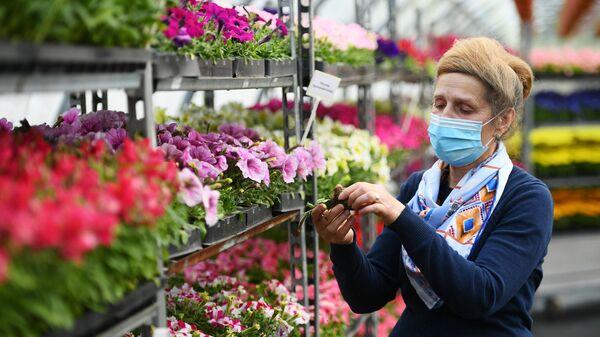 Высадка цветов в Москве