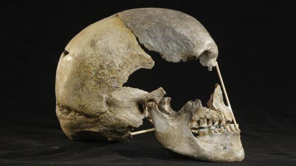 Череп из Златы Кун (Чехия) возрастом около 45 тысяч лет