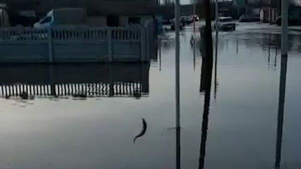 Клюет, клюет: рыбалка на городских улицах в Башкирии