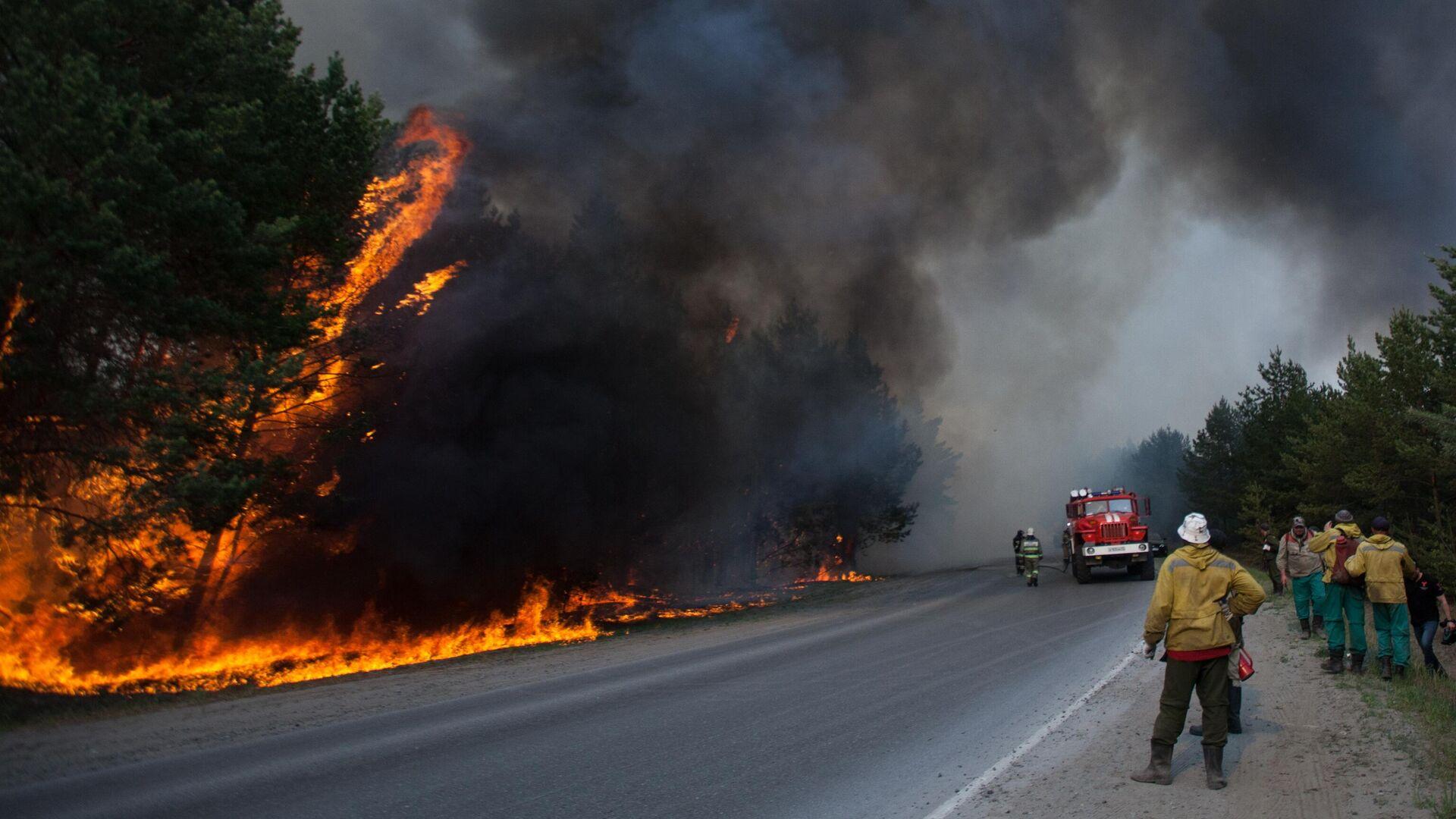 В Югре площадь лесных пожаров возросла в семь раз