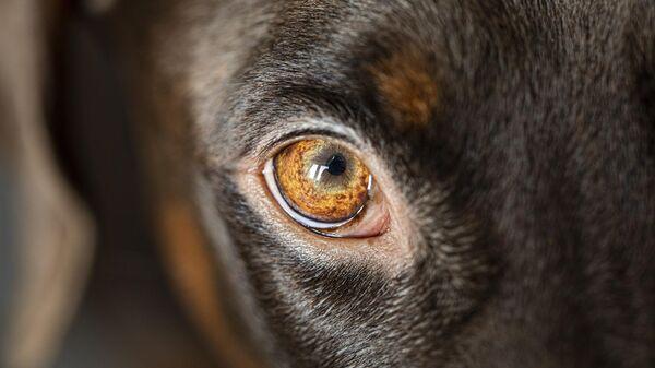Житель Биробиджана 15 раз выстрелил в сидевшего на цепи пса