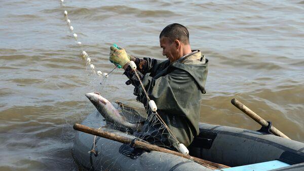 Рыбак вытаскивает из сети рыбу