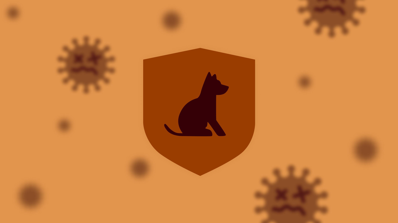 Российская вакцина от COVID-19 для животных Карнивак-Ков
