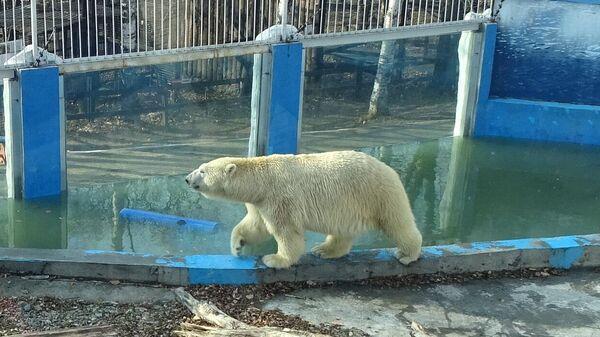 Белый медведь Хабар