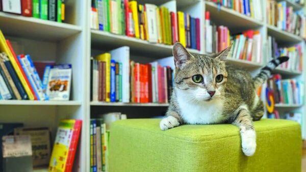 Кошка Муся из библиотеки имени Маяковского в Санкт-Петербурге