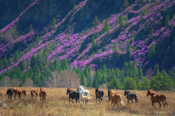 Склоны цветущего маральника