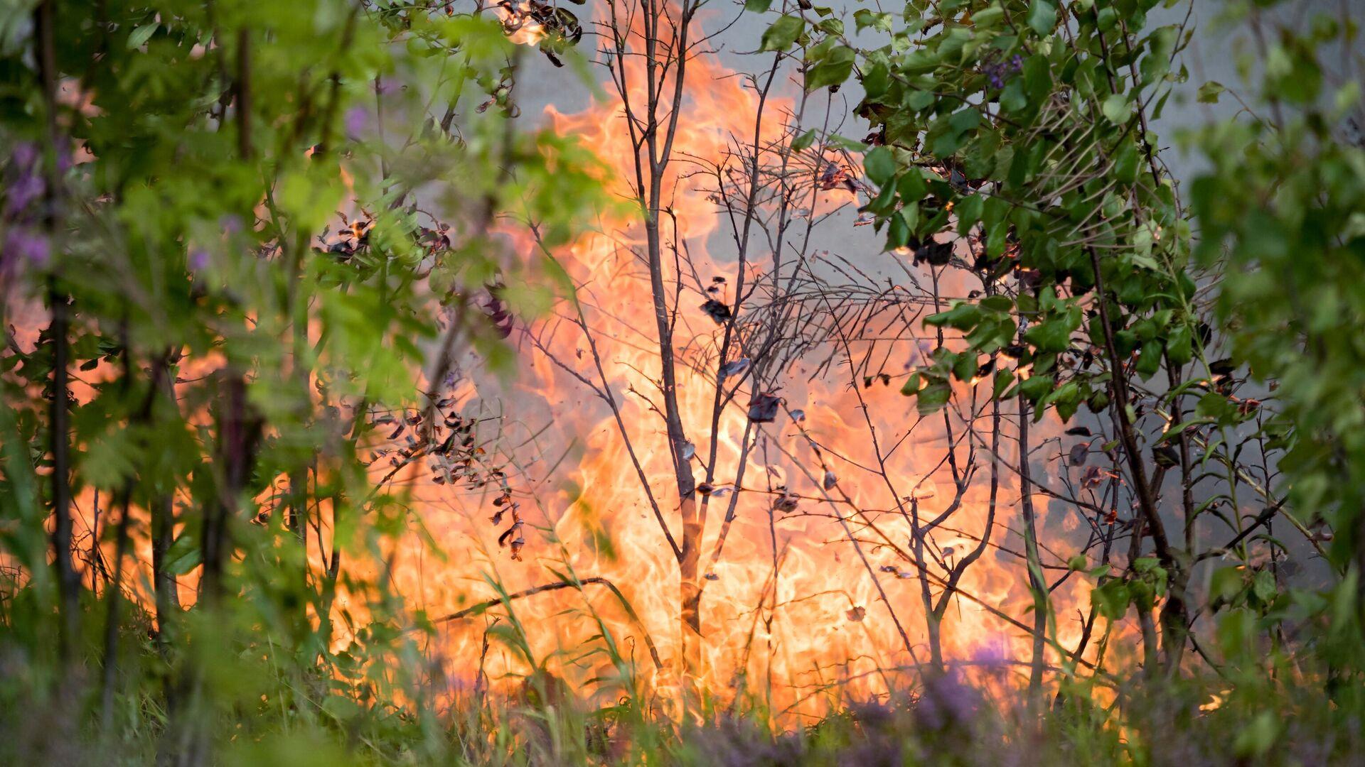 Природные пожары в Карелии - РИА Новости, 1920, 19.07.2021