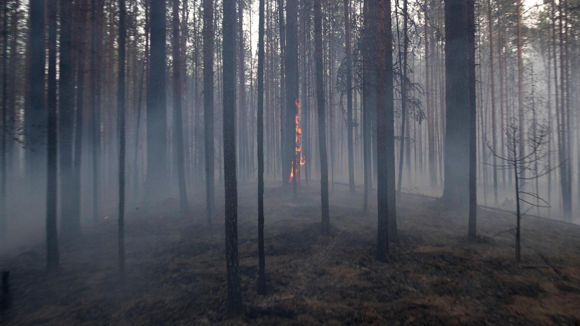 Природные пожары - РИА Новости, 1920, 01.08.2021