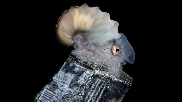 Работа фотографа Steven Kovacs, занявшая третье место в фотоконкурсе Ocean Photography Awards 2021