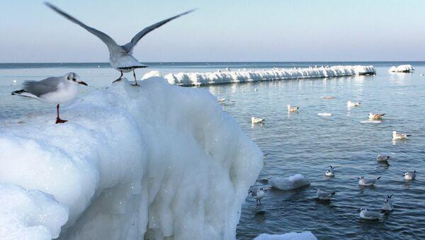 Балтийское море в Калининградской области. Архивное фото