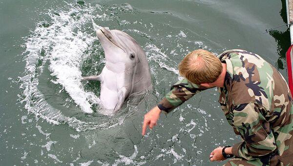 Тренировка боевого дельфина. Архивное фото