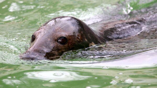 День тюленя в калининградском зоопарке