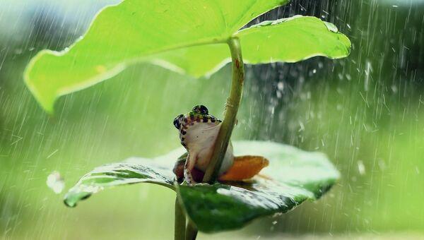 Лягушка прячется от дождя