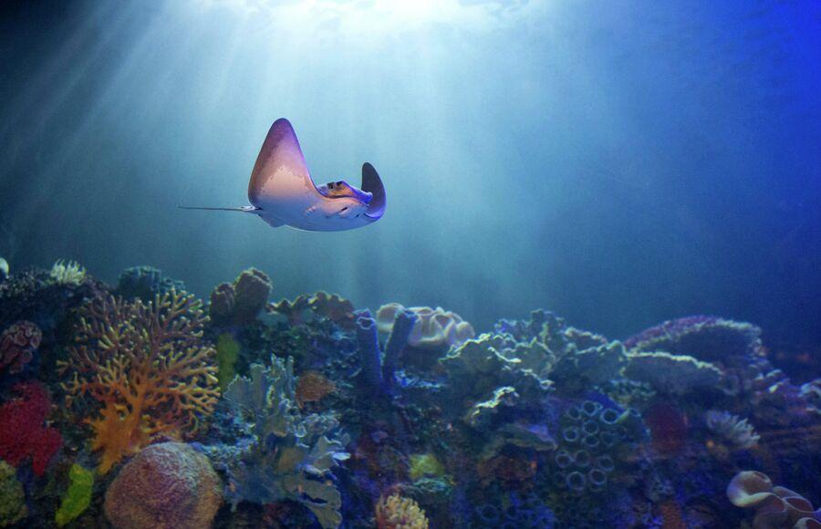 Скат в аквариуме Мехико