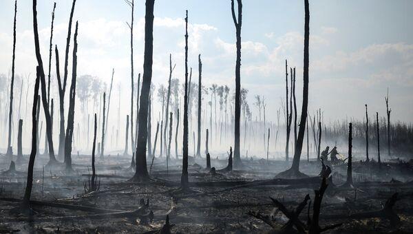 Лесные пожары, архивное фото