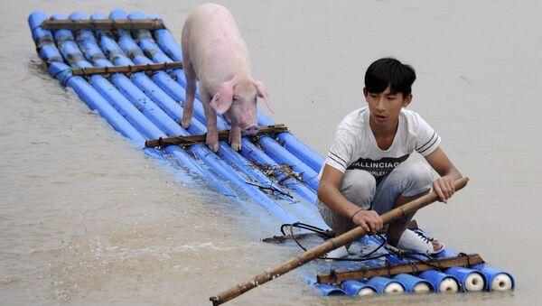 Китайский мальчик со свиньей на самодельном плоту во время наводнения в Китае