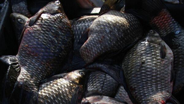 Рыба. Архивное фото