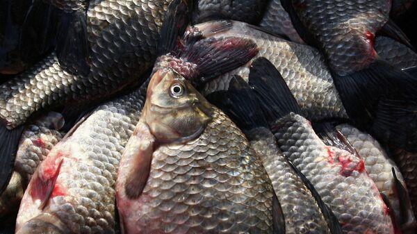 Лоток с рыбой . Архивное фото