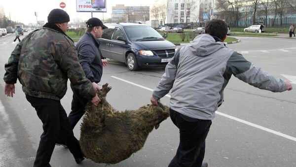 Подготовка к мусульманскому празднику Курбан-Байрам в Москве
