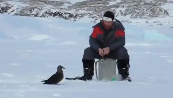 Антарктическая рыбалка