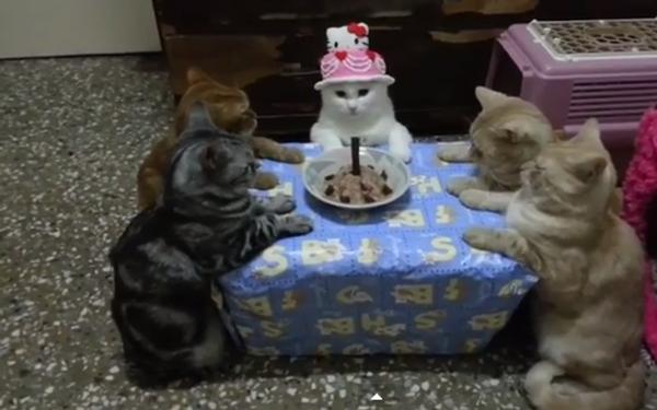 Тихий и спокойный день рождения в кругу котов