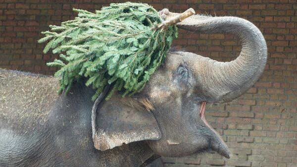 Слон в зоопарке в Германии