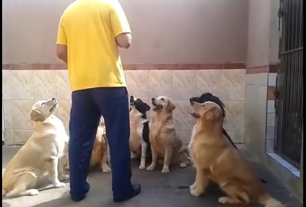Чудеса собачьей выдержки, или Хорошие манеры