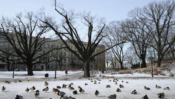 Утки в парке Бастионная горка в Риге