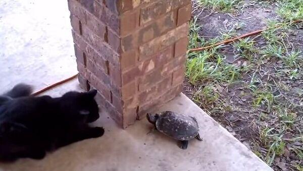 Ахиллес и черепаха, или Наперегонки с котом