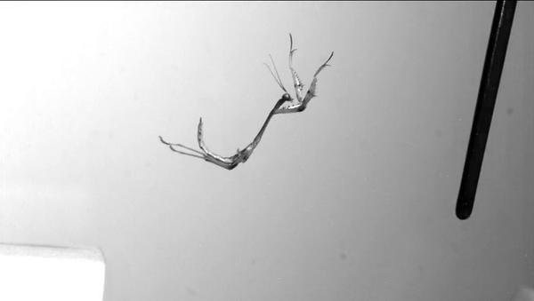 Кадр из замедленной съемки прыжка богомолов. Видео авторов статьи